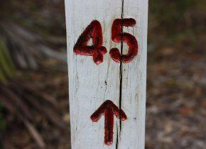 L'AIPAS fa 45!